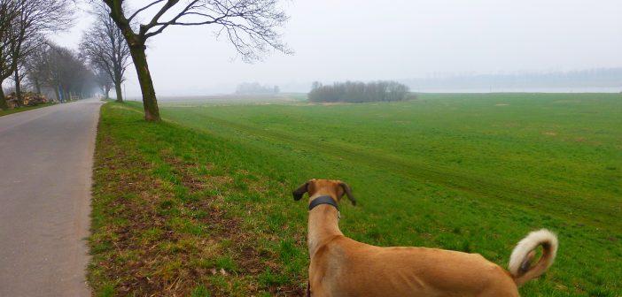 Hundefreiheit: Unterm Hammer Deich