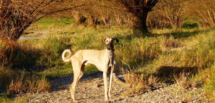 Hundefreiheit: Urdenbacher Kämpe