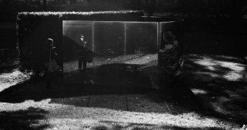 Bild der KW26: Two Way Mirror Hedge 0