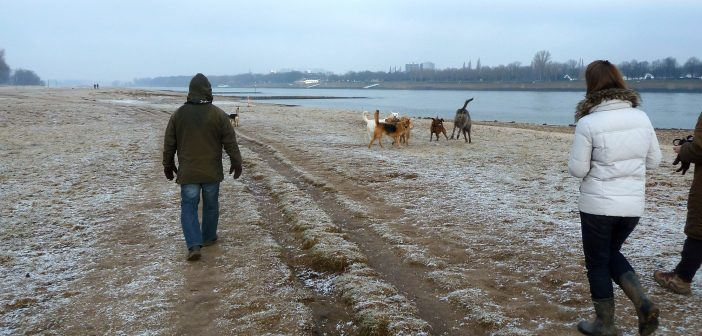 Hundefreiheit: Löricker Rheinwiesen