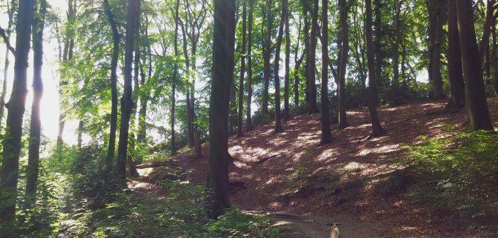 Hundefreiheit: Hangwald oberhalb der Düsselauen bei Gödinghoven