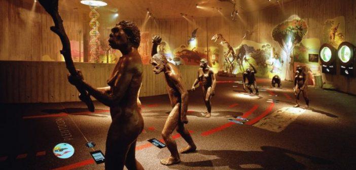 Neanderthaler im Museum