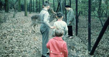 Im Wildpark im Grafenberger Wald (ca. 1959)