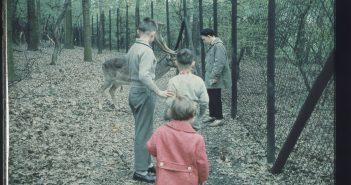 Im Wildpark (ca. 1960)