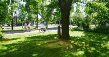 Weitgehend unbeachtet - die Beuys-Eiche am Rand des Horionplatzes