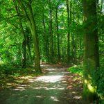 In den Aaper Wald hinein