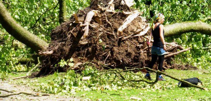 Ela 2014: Katastrophentouristin