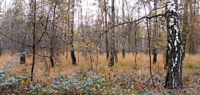 In der Hildener Heide (Foto: Wikimedia)