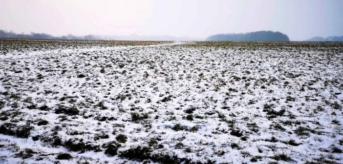 BdW11: Winterwiese