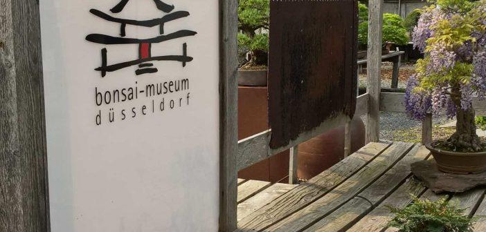 Bonsai-Museum - Bäume, die sich vor dem Menschen verneigen