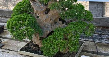 Schrifttafeln geben Informationen zu den Bäumen