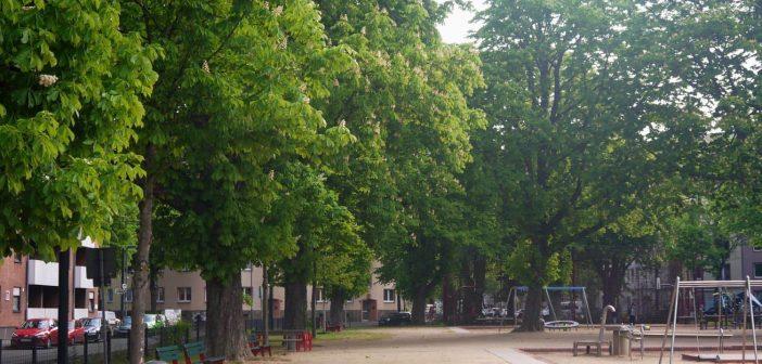 Der Spichernplatz und seine Bäume