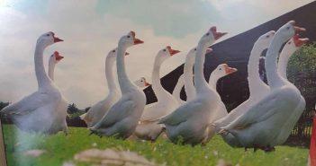 """Mehr als ein Geheimtipp: """"Goosefair"""" von China Drum"""